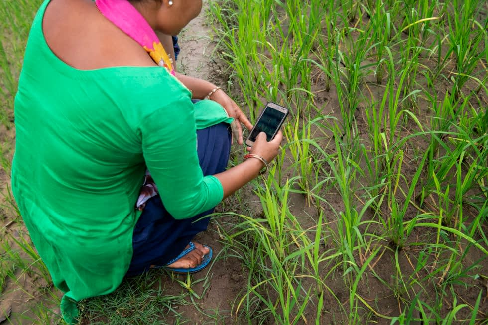 Farmer uses mobile phone in field.
